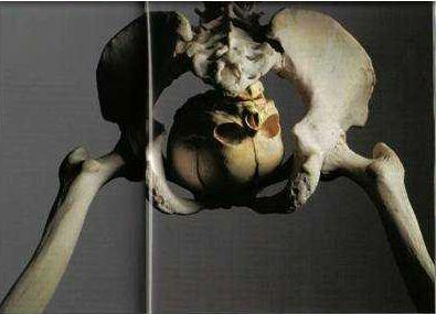 Liberal skeleton.jpg