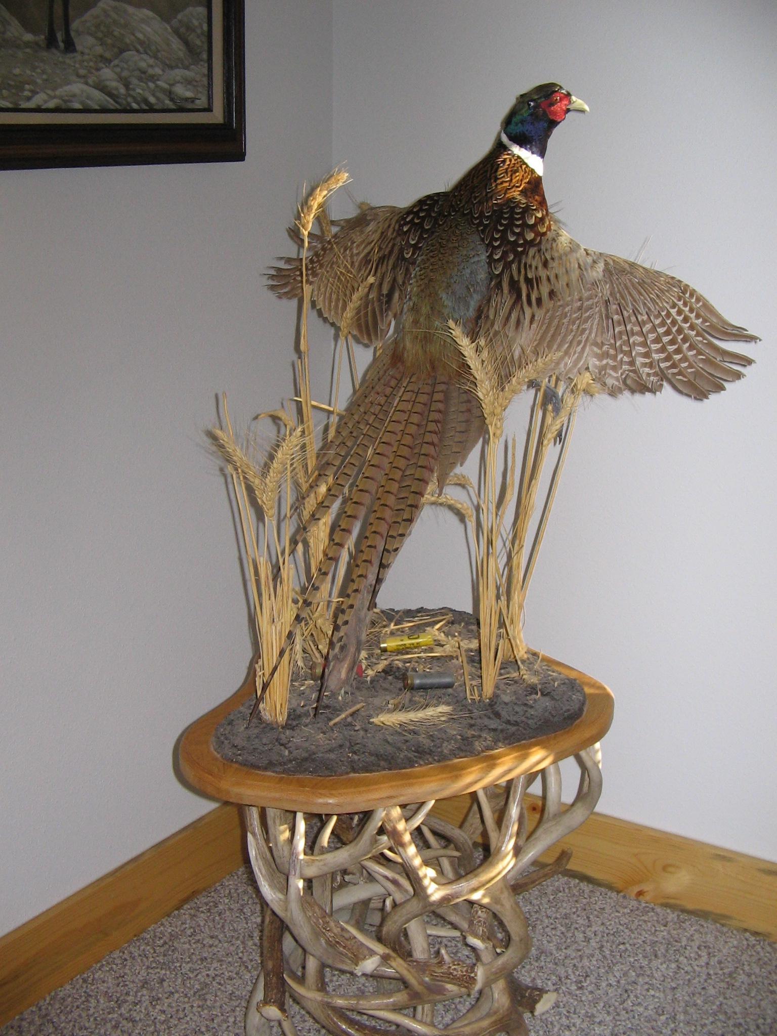 pheasant 002.jpg